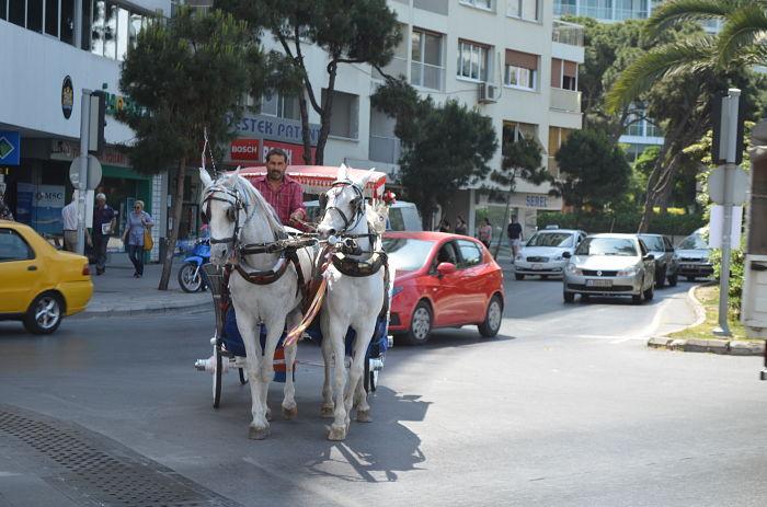 Turkey 1095_opt
